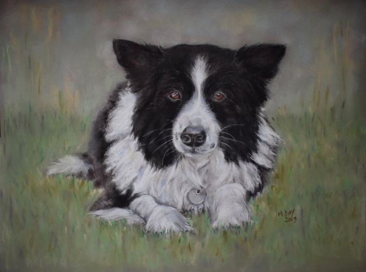 pastel painting off black and white border collie