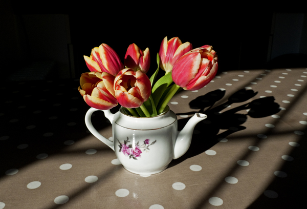 Teapot & Tulips