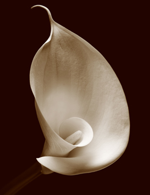 Easter Lily No4