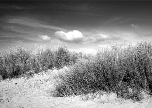 Norfolk Dune