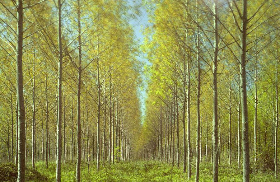 Tree Plantation No1