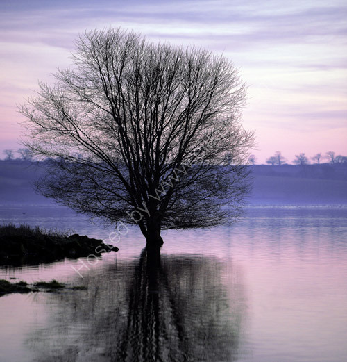 Watery Tree