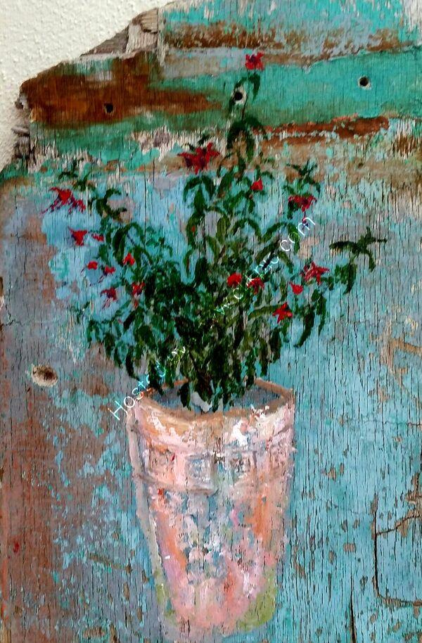 Fuchsia in Roman Pot