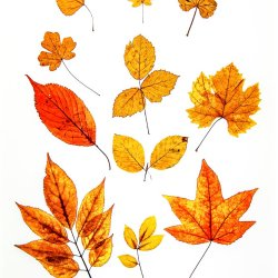 Leaves4 by Tony Cutting