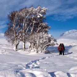 A Winter Walk by Lyn Sharples