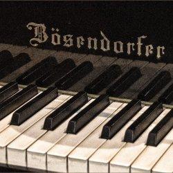 Bosendorfer by Lyn Sharples