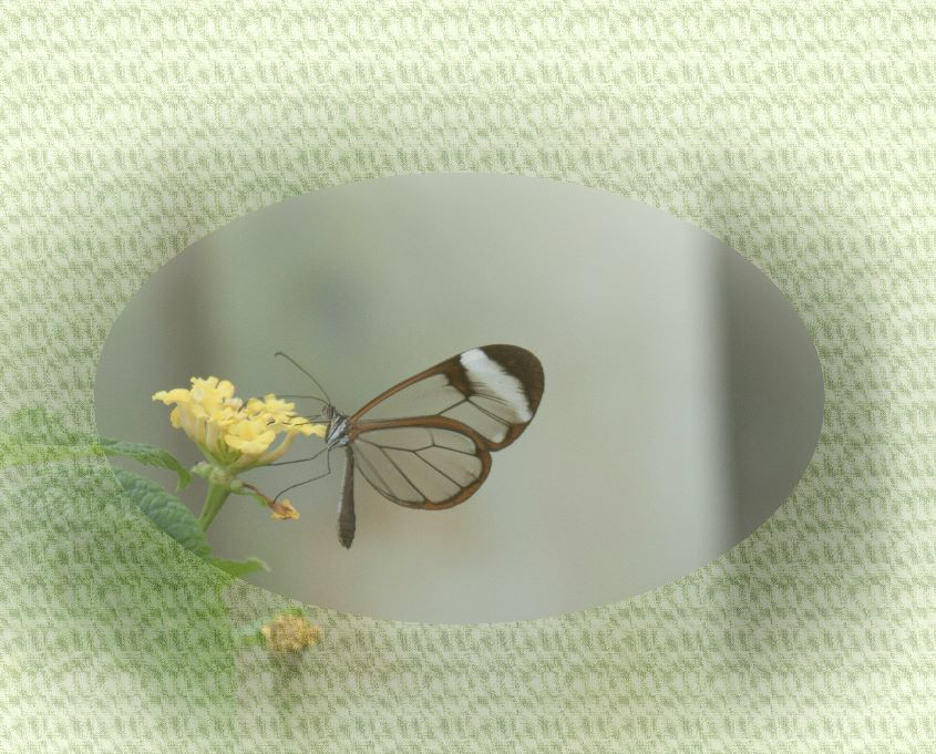 Butterfly By Janet Cox