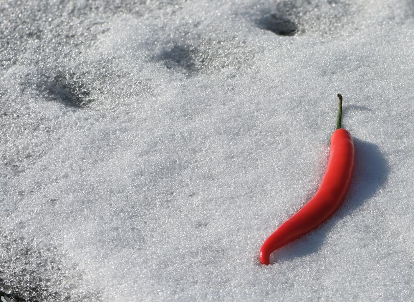 Chilly Chilli