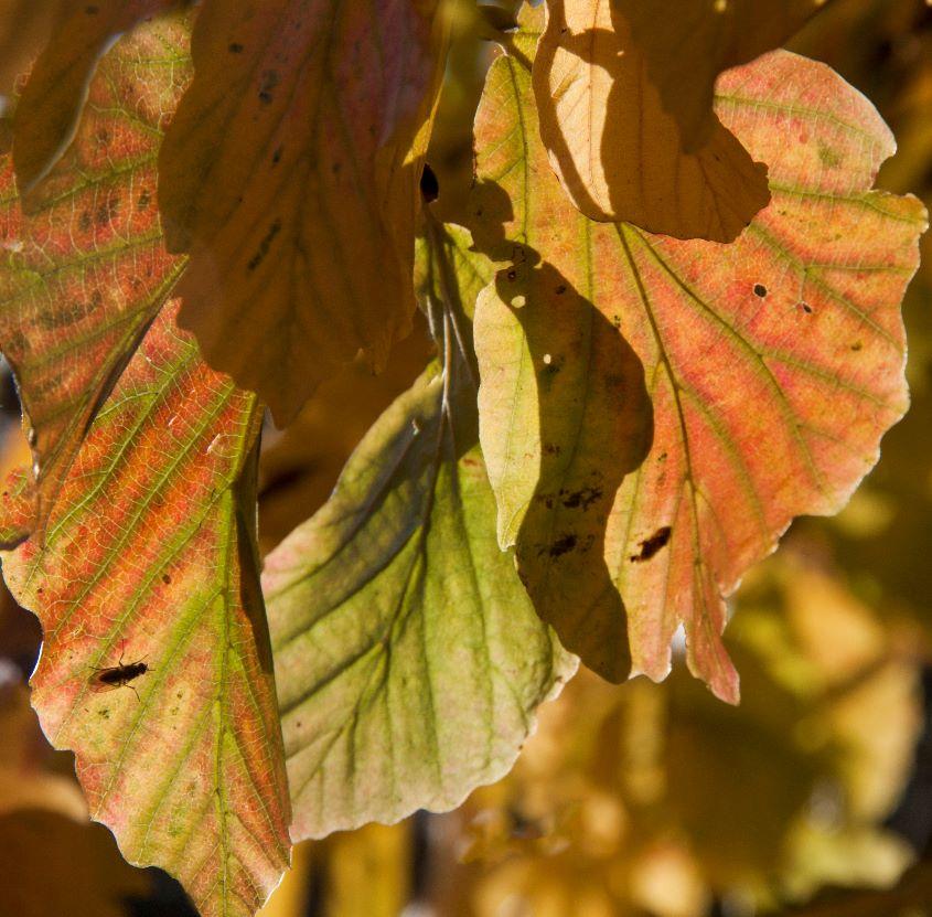 Chlorophyll Receding by Janet Cox