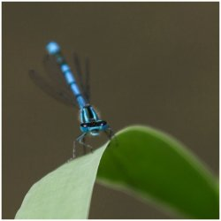 Dragonfly by Iain McCallum