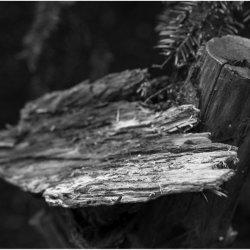 Edge detail by Iain McCallum