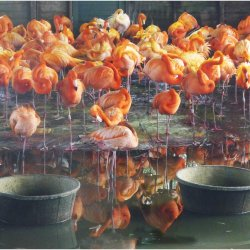 Flamingo refugees by Janet Cox
