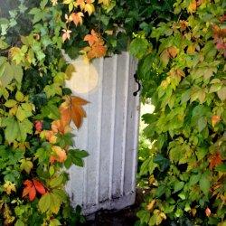 Garden Door by Jackie Poulter