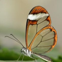Glass Wing by-James Mason