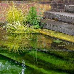 Hampton Court by Chris Morris