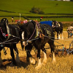 LLangattock Ploughing Match by James Mason
