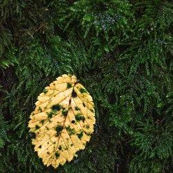 Leaf by Lyn Sharples