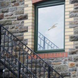 Newport Window