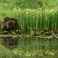 Pond Dwelling