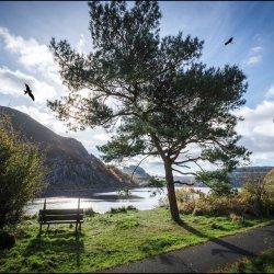 Reservoir Kites by Chris Moris