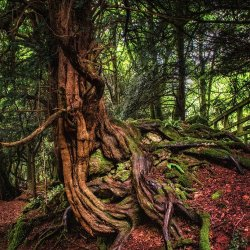 Roots by Keith Sharples