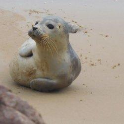 Seal Norfolk by Anne Richards