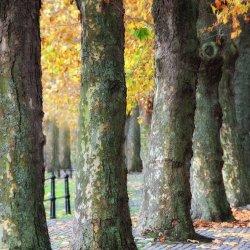 Street Trees by Lyn Sharples