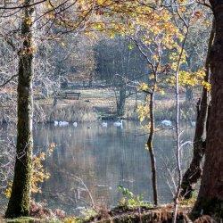 Swan lake in autumn by chris morris