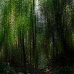 Treasure Grove