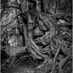 Twisted by Iain McCallum