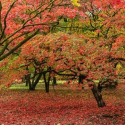Westonbirt-02 by Pat Hopkins