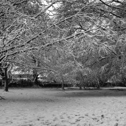 Winter in the Park by Chris Morris