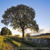 Evening Sun. Weardley, West Yorkshire
