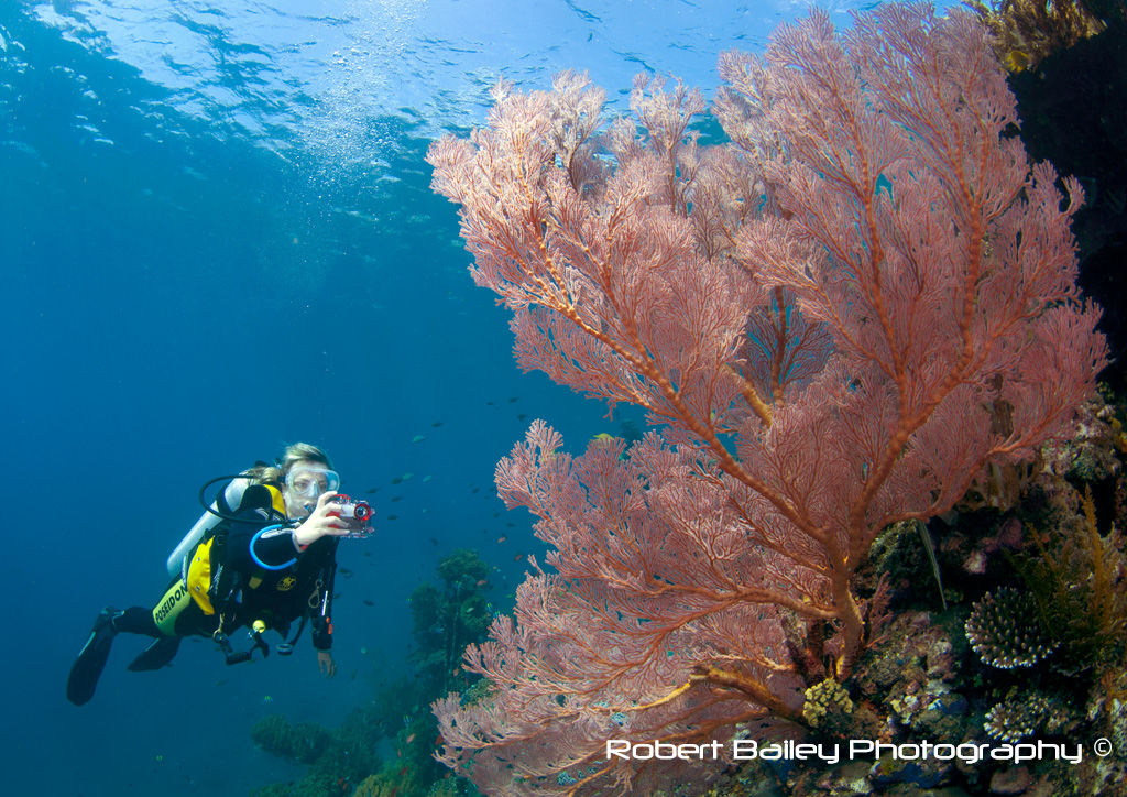 Diver on Japanese Wreck in Lipah Bay
