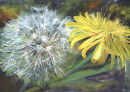 Dandelion & Seed Head