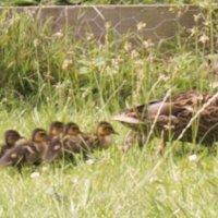 Spring visitors