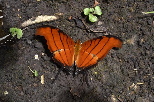 ? butterfly