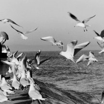 Gull Frenzy
