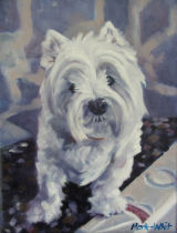 Holly the Westie