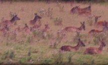 deers-in-ashton-court