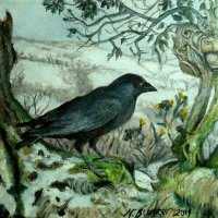Jackdaw-in-the-snow