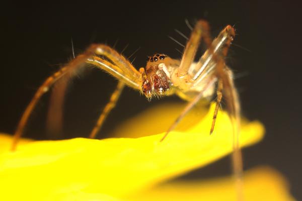 An Orb Web Spider