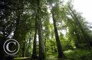 Deciduous Woodland.