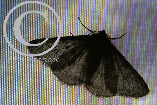 Moth on a TV screen