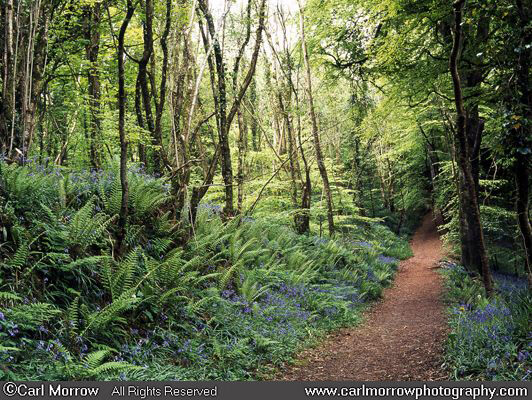 Woodland trail in spring
