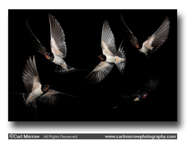 Swallows in flight (5 layer composition)