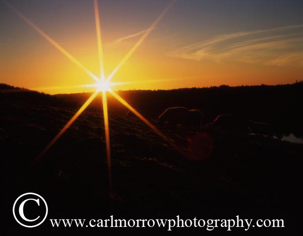 Sunrise from a County Cavan hillside.