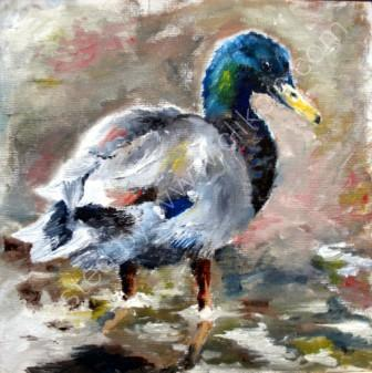 Duck (sold)