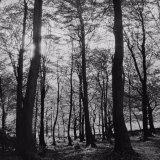 Autumn, Corbar Woods - Selenium Toned