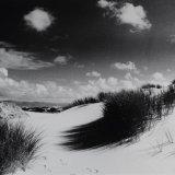 Dunes - Selenium Toned